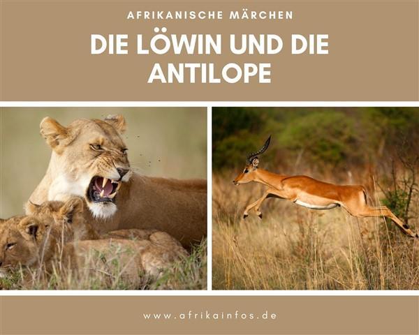 Die Löwin und die Antilope
